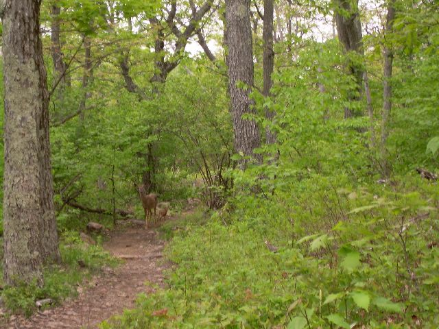 Doe with fawn