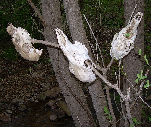 Tree of skulls