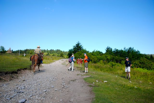 Horse and hikers on the same trail