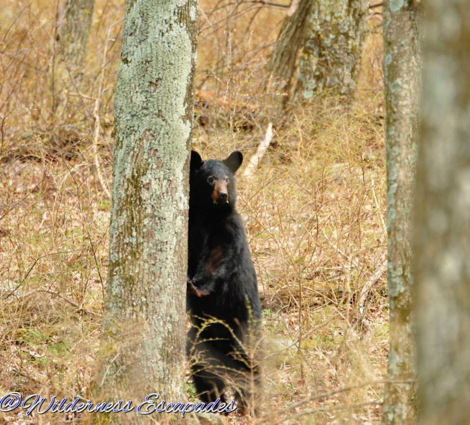 First black bear of 2014